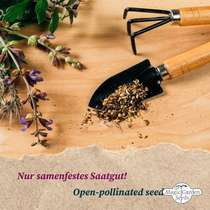 'Heritage strawberry seeds' seed kit with 3 aromatic varieties #5