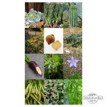 Exquisite Vegetable & Herbal Delicacies - Seed kit #2