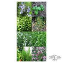 'Herbes de Provence' seed kit #2