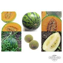'Sweet & hardy melons' seed kit #2