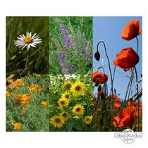 'Summer meadow flowers' seed kit #2