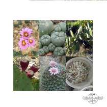 'Cacti assortment' seed kit #2