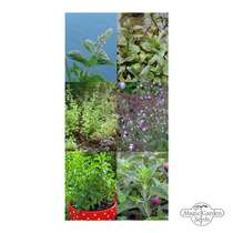 Seed kit: 'Mint-variety', 3 open-pollinated fresh mint varieties #2