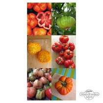 Delicious Heirloom Beefsteak Tomatoes - Seed kit #2