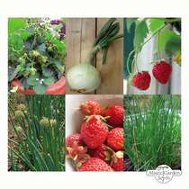 Strawberries, Onions & Chives - Seed kit #2
