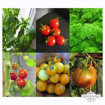 Tomatoes, Basil & Parsley (Organic) - Seed kit #2