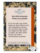 Edible Flowers (Organic) - Seed kit #7
