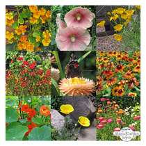 'Colourful nectar plants - organic' seed kit #2